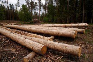 Торгівля деревиною